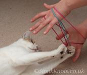 Cat's Cradle - puzzling